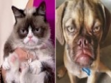 How Does Grumpy Cat Feel About 'Earl The Grumpy Puppy'?