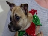 Home For The Howl-idays: Little Pups Need A Secret Santa