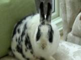 How A Pet Rabbit Is Giving Children A Civics Lesson