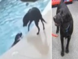 Hero Dog That Saved Canine Friend From Drowning Honored
