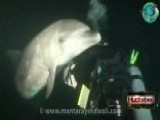 Injured Dolphin Swims To Divers For Help