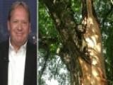 Illinois Man Survives Two Lightning Strikes