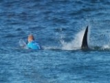 Is There A Global Surge In Shark Attacks?