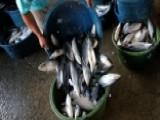 Illinois Lifts Ban On 'pitchfork Hunting'