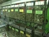 Justice Department Targets Recreational Marijuana