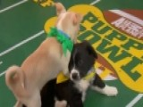 Kirk Cousins Helps Pint-sized Players Prepare For Puppy Bowl