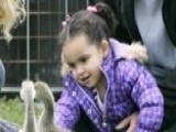 Law Is 'unclear' In Custody Battle Over Baby Veronica