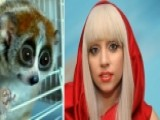 Lady Gaga Reportedly Bitten By Slow Loris During Video Shoot
