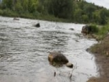 Levels Of Toxic Metals In Animas River Slowly Dropping