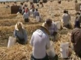 Labor Shortage Drives Up Farm Wages, 00004000 Could Hike Food Prices