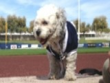 Milwaukee Brewers Adopt Unofficial Spring Training Mascot