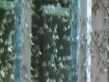 Mayflies Invade Wisconsin Town, Cover Everything In Sight