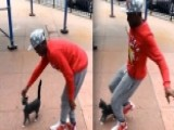 Man Faces Animal Cruelty Charge For Kicking Stray Cat