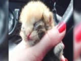 Miracle The Kitty Miraculously Survives Major Apartment Fire