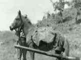 Marines Honor War Horse Sgt. Reckless