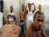MS13 Gang Finding Sanctuary In Liberal States