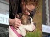 Nurse Introduces Pet The Pooch Program At Hospital