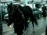 NYPD Police Horse Safe After Running Through Times Square