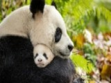 New Disney Documentary Takes Viewers Into The Wilds Of China