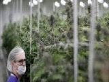 Nevada Issues State Of Emergency Over Legal Pot Shortage
