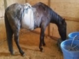 Neglected Horse Sues Former Owner For $100,000