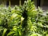 Ohio Voters Reject Marijuana Legalization