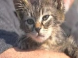 Oregon Man Saves Kitten Glued To The Road