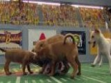 Puppy Bowl Raises Adoption Awareness
