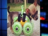Puppy With No Front Legs Gets Custom 3D-printed Cart