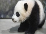 Power Player Plus: Bao Bao