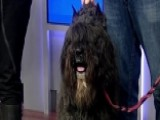 Preview Of The 139th Westminster Kennel Club Dog Show