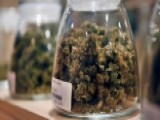 Pot Study Claims Weed Is The Safest Common Drug