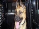 Police Dog 'Judge' Receives Emotional Tribute