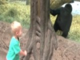 Peek-a-boo, I See You! Toddler Plays With 2-year-old Gorilla