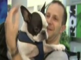 Pilot Diverts Flight To Save Dog's Life