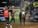 Professional Bull Riders Buck Into Madison Square Garden