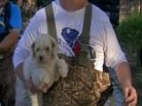 Pet Rescue Efforts Under Way In Flooded Houston Neighborhood