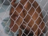 Pit Bulls Terrorize Florida Community
