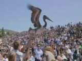 Pelicans Crash Pepperdine's Graduation Ceremony