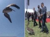 Pelicans Crash Pepperdine University Graduation Ceremony