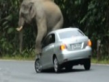 Raw Video: Elephant Goes On Rampage, Damages Car