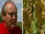 Raisin Farmer Challenging $700,000 Fine By USDA