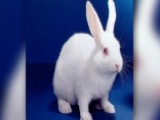 Radio Host Killed Bunny On Air?