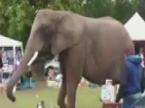 Runaway Elephant Casually Strolls Through Flea Market
