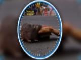 Robot Rat Skeeves New Yorkers