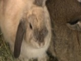 Rescuers Search For Bunnies Abandoned In Park, Left To Die