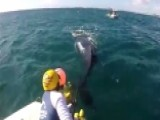 Rescuers Free Distressed Humpback From Shark Nets