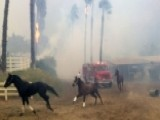 Ranchers Race To Save Horses From Wildfires In California
