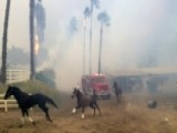 Racehorses Set Free As California Wildfire Nears Training Facility
