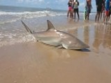 Raw Video: Woman Reels In Shark At Texas Beach